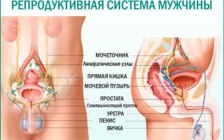 Препараты от простатита недорогие и эффективные: обзор качественных таблеток