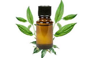 Для чего применяется камфорное масло: химический состав и лечебные свойства продукта, способы применения в медицине и косметологии, простые рецепты для здоровья и красоты
