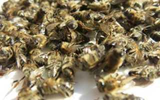 Лечение аденомы простаты пчелиным подмором: рецепты