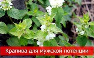 Крапива для потенции мужчин рецепты настойки: лечебные свойства семян крапивы