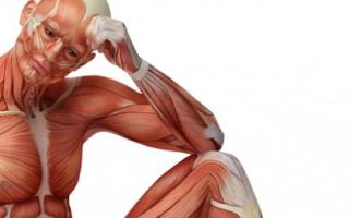 Упражнения от простатита и лечебная гимнастика, как эффективное средство профилактики простатита у мужчин