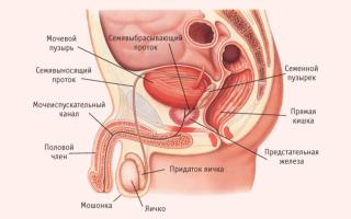 Болят яички у мужчин: причины и лечение в домашних условиях
