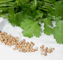 Петрушка от простатита: рецепт отвара из семян для лечения простаты
