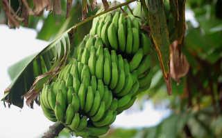 Банан — польза и вред для здоровья, свойства и противопоказания