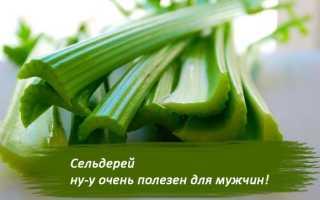 Сельдерей, польза и вред для мужчин: чем полезен для здоровья, лечебные свойства корня и стебля, андростерон для организма, сок, в сыром виде, настойка на водке